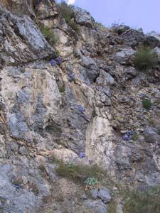 Fiori di Monte Moschereto, la 'montagna scoscesa di Porcile'