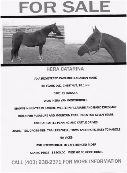 Horses and Tack FOR SALE