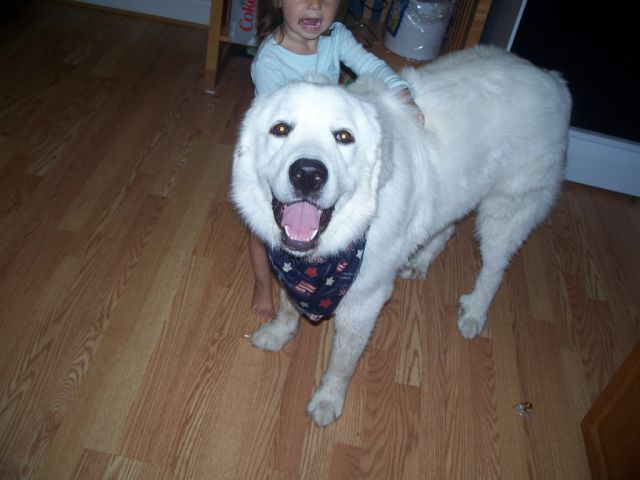 NorthStar Great Pyrenees Rescue of MN